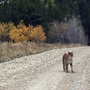 Police: Possible mountain lion sighting in Lebanon