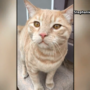 Burglars kick cat during break-in at UFC fighter's Las Vegas home