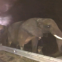 Tractor-trailer carrying elephants to winter retreat catches fire on I-24 Monday morning
