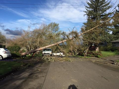 tree down on powerlines - Juanita Swartwood.jpg