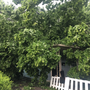 Tree falls on home, almost hitting people in yard