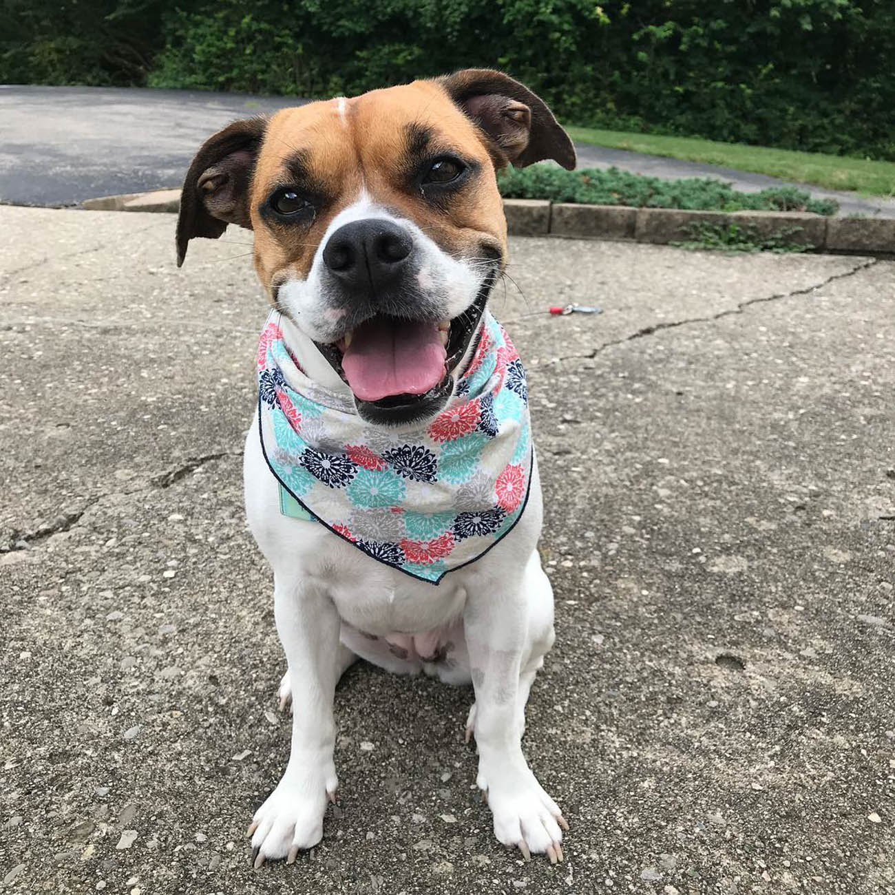 "Winne Wiggles is a self-proclaimed ""sassy"" Bulldog and Puggle mix. She loves eating leaves and pooping under the table. / Image courtesy of Instagram user @winniewiggles // Published: 11.28.18"