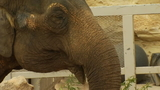'Lucky the Elephant' wins legal battle