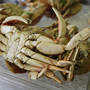 Crabs native to Pacific waters caught off Connecticut coast