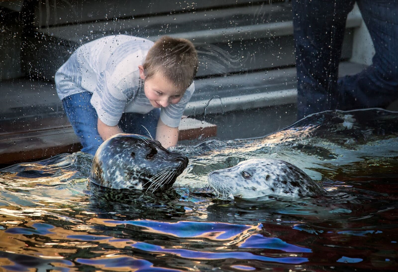 Harbor seals are one of several species you can come visit.