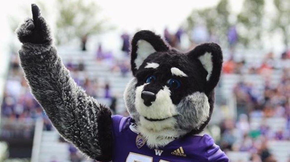 Harry the Husky and the Duck battle it out on Twitter ahead of Saturday's game