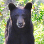 Campground off Highway 21 closed due to black bear activity
