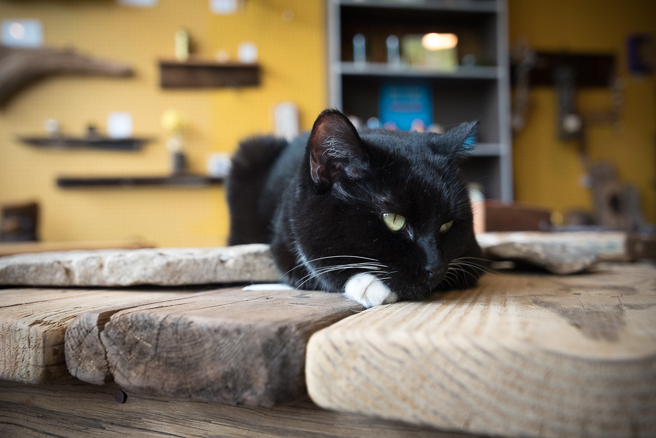 The resident cat of Cultivate Nature Shop rests on a table. ADDRESS: 108 E. Main St. (47250) / Image: Phil Armstrong, Cincinnati Refined // Published: 7.29.17