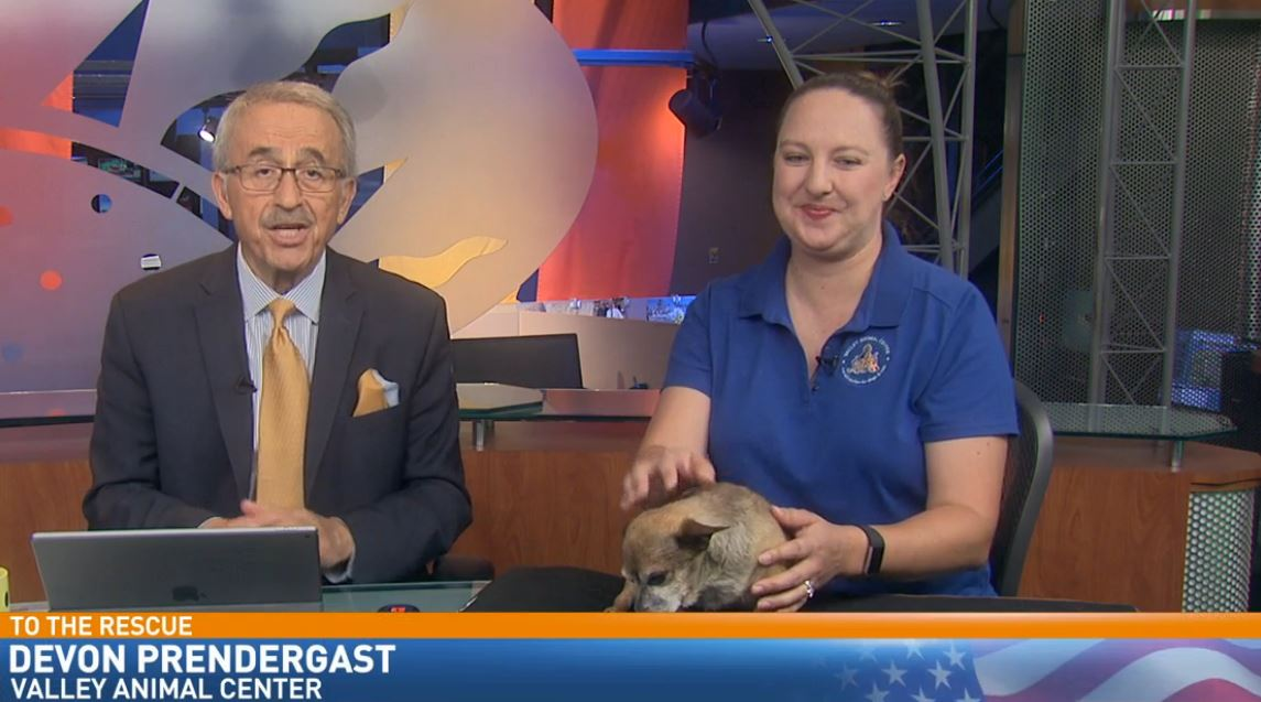 Devon Predergast from Valley Animal Center visited with a mature dog looking for a good home