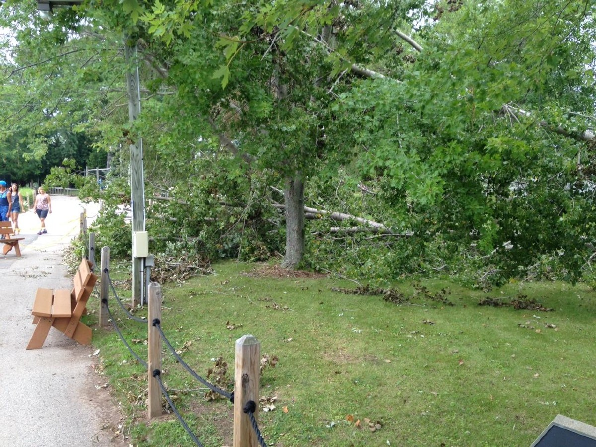 A downed tree is seen at the NEW Zoo in Suamico Aug. 17, 2015, three days after storms caused an estimated $20,000 in damage at the zoo. (WLUK/Phil DeCastro)