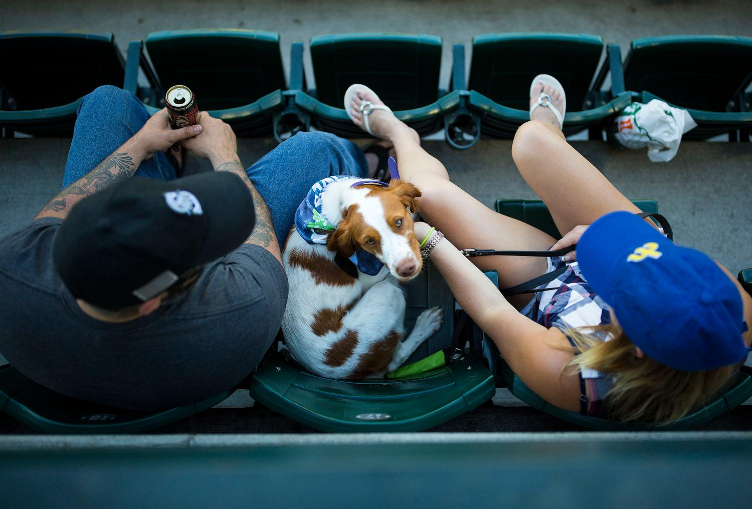 It was another night for Bark in the Park! Mariners fans were allowed to bring their dogs to the game to enjoy the sun, some Mariners baseball, and man's best friend. The next Bark in the Park game will be September 5, against the Houston Astros. (Sy Bean / Seattle Refined)