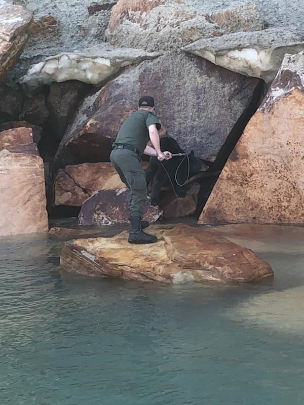 A rescue team helped a bear stranded and starving at the Pictured Rocks National Lakeshore.  Photo courtesy: Alger Co Sheriff's Office.