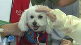 Dogs give doses of therapy at Geisinger