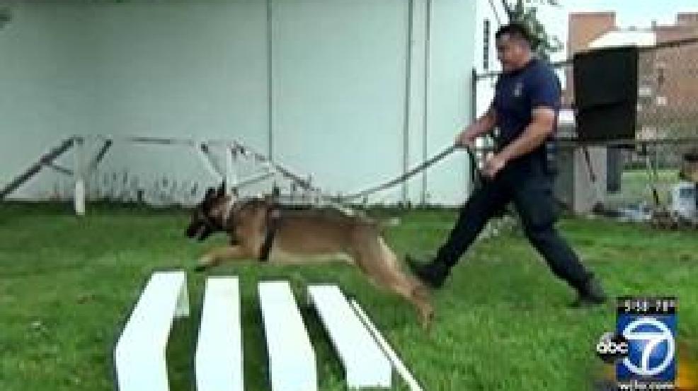 Good Dog Training Pensacola