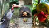 PHOTOS | Nashville Zoo animals enjoy strawberries donated after graduation
