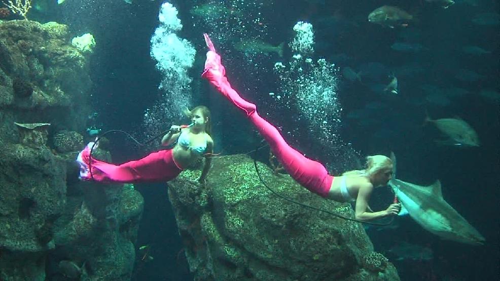 Florida Mermaids Swimming At Sc Aquarium Wciv