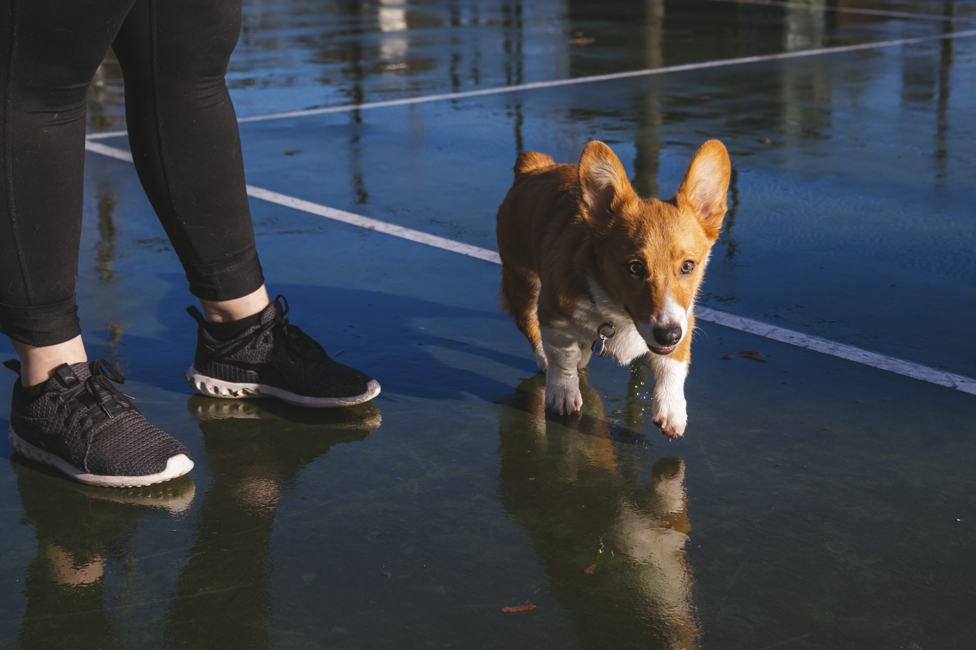 <p>Meet Floyd the six month old Pembroke Welsh Corgi! Floyd likes snuggles, food and dogs. He dislike sirens, dogs on the TV, and rain! You can follow Floyd's journey through life on his Instagram page @floyd_corgi.{&nbsp;}The Seattle RUFFined Spotlight is a weekly profile of local pets living and loving life in the PNW. If you or someone you know has a pet you'd like featured, email us at hello@seattlerefined.com or tag #SeattleRUFFined and your furbaby could be the next spotlighted! (Image: Sunita Martini / Seattle Refined).</p>
