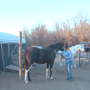 Wagoner County woman claims horse shot in head overnight