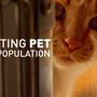 Fighting Pet Overpopulation