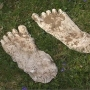 Is Bigfoot in Ohio? A company's paying $1 million for tips to find the creature