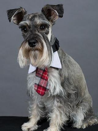 Willis The Weather Dog   KATU