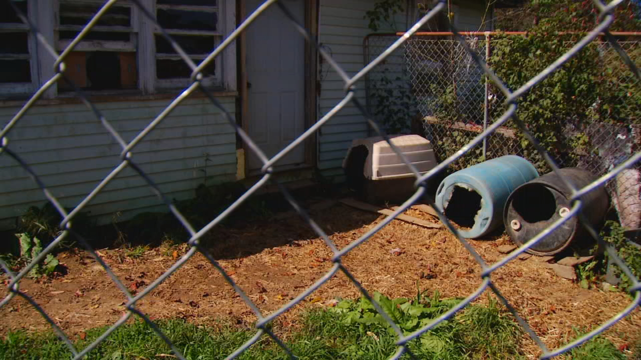 A  rabid fox found in the backyard of a Swannanoa home is the reason two dogs were taken from their owner and are on the verge of being put down.  (Photo credit: WLOS staff)
