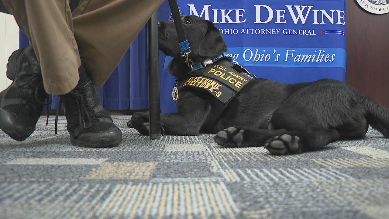 Reptar, the Ohio Bureau of Criminal Investigation's newest K-9 agent, is trained to sniff out electronic devices. (WSYX/WTTE)<p></p>