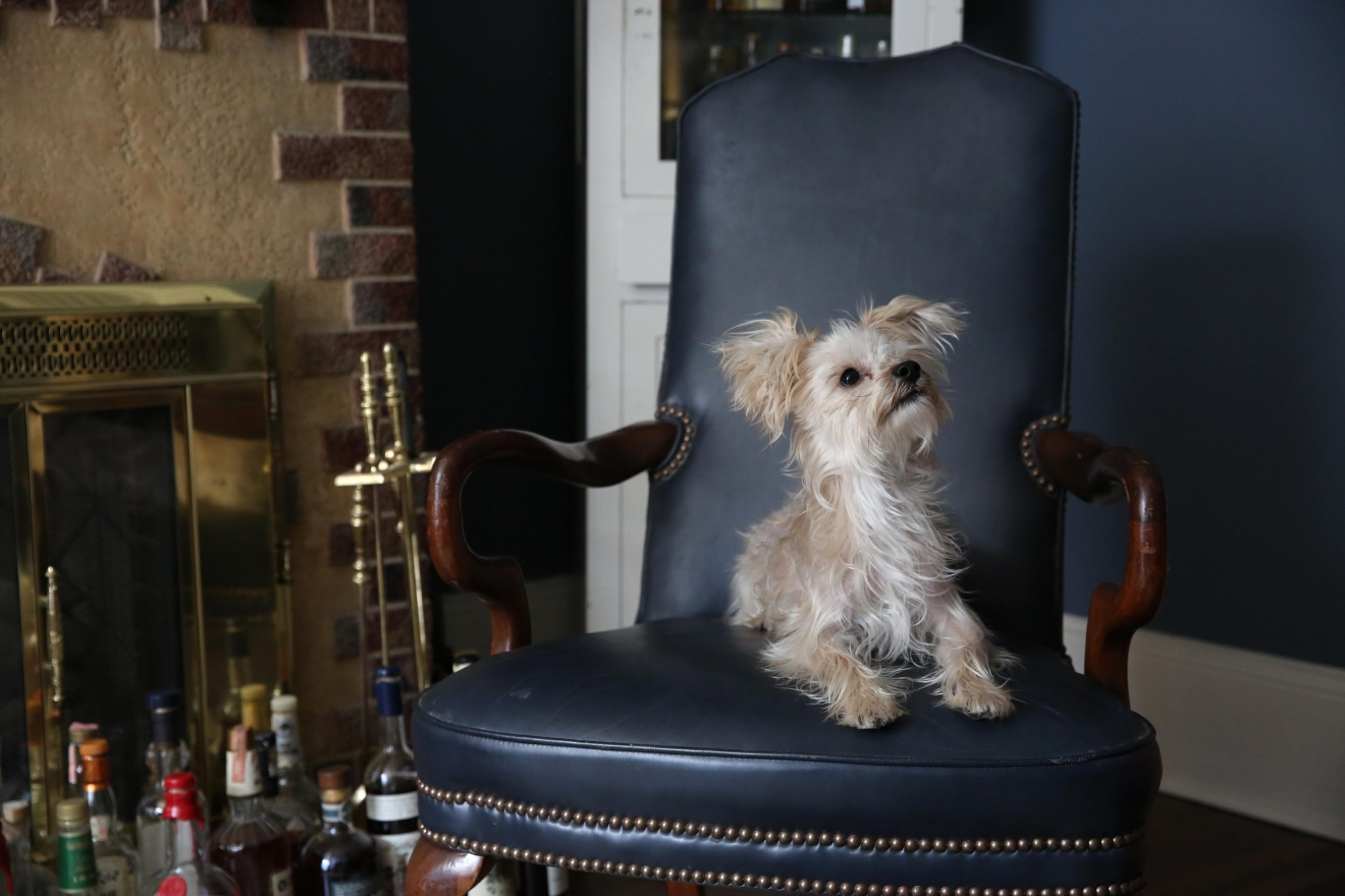 Meet Hank, a 5.5-year-old Maltese/Yorkie mix who is known worldwide (ok, ok we kid) for his mad ups! But seriously, if you have a ball or treat in your hand, suddenly he can jump like four feet high to steal it from you. Oh, and he can stand on his hind legs and twirl around like that dog in The Artist. Are you in love with Hank yet, because we are!! Hank went swimming for the first time this summer at a lake house in Arizona and discovered he loved it. He also enjoys canoeing, hiking and lounging on giant unicorn floaties. Hank prefers to be the center of attention though and does not enjoy sharing the limelight with other dogs (except his neighborhood buddy Otto) or flying on planes or the sound of sirens. If you or someone you know has a pet you'd like featured, email us at dcrefined@gmail.com or tag #DCRUFFined and your furbaby could be the next spotlighted! (Image: Amanda Andrade-Rhoades/ DC Refined)