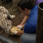 Take This Job and Love it: Animal Caretaker