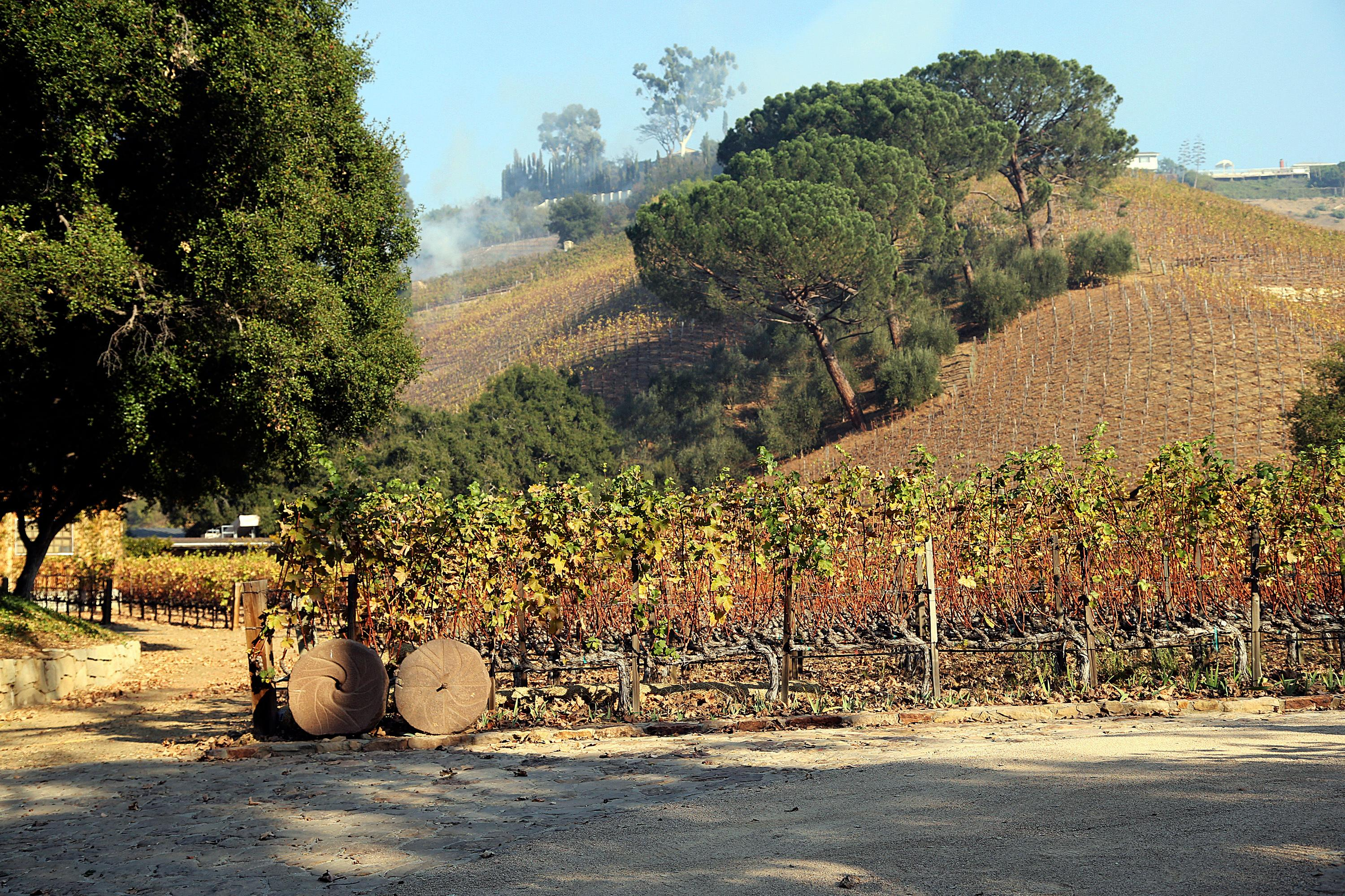 This Wednesday, Dec. 6, 2017 photo shows media mogul Rupert Murdoch's 16-acre (6.5-hectare) Moraga Vineyards estate, where about 7 acres (2.8 hectares) of vines appeared to have been damaged after a wildfire swept through the Bel Air district of Los Angeles. (AP Photo/Reed Saxon)