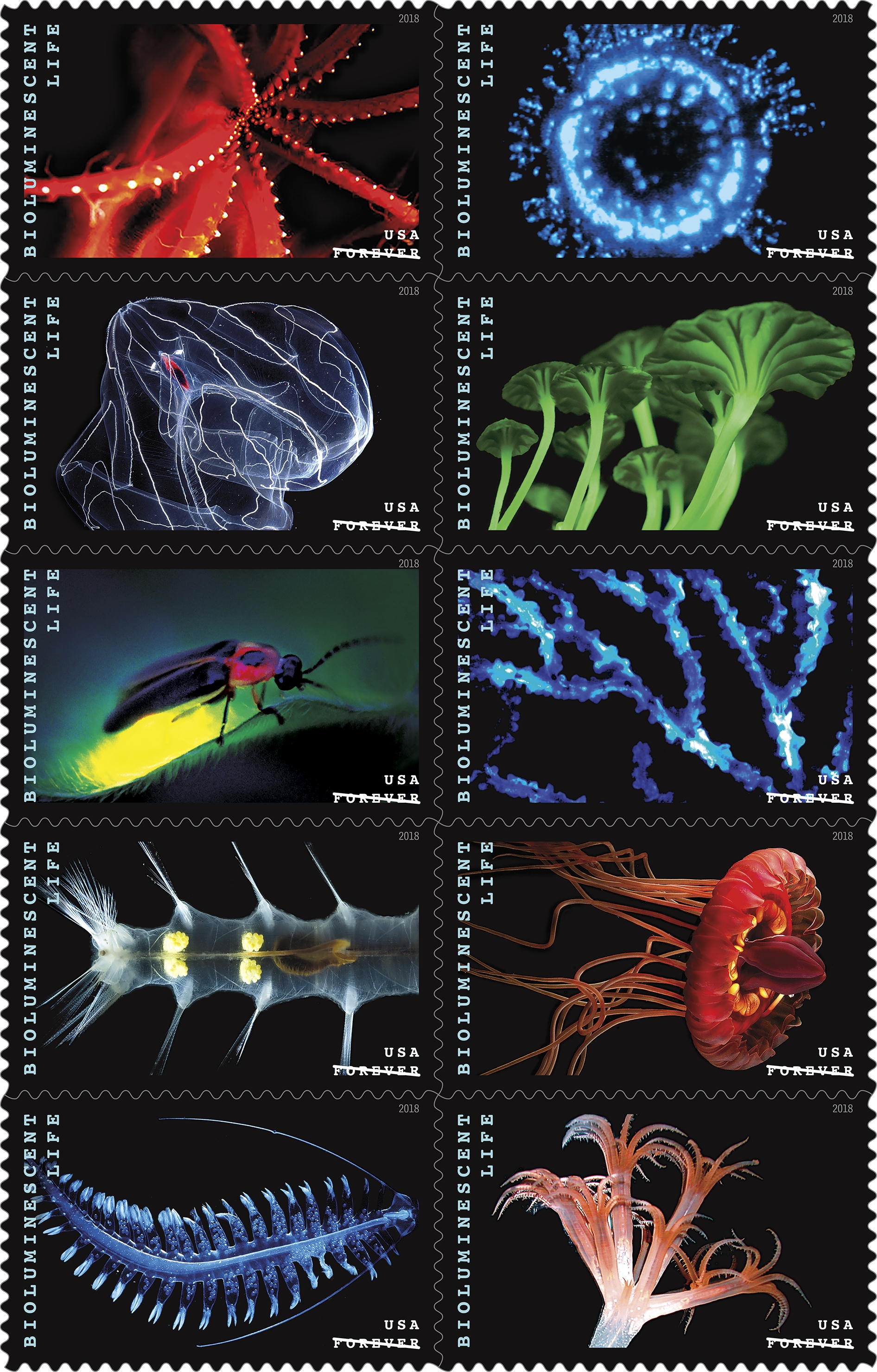 Bioluminescent Life: This issuance celebrates the phenomenon of bioluminescence — the ability of some species to glow — with a pane of 20 stamps featuring 10 life-forms that create their own light. (USPS)