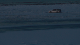 State Parks officials investigate abandoned vehicles on the Great Salt Lake