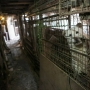 PA shelter houses five of the dozens of dogs rescued from South Korean meat farm