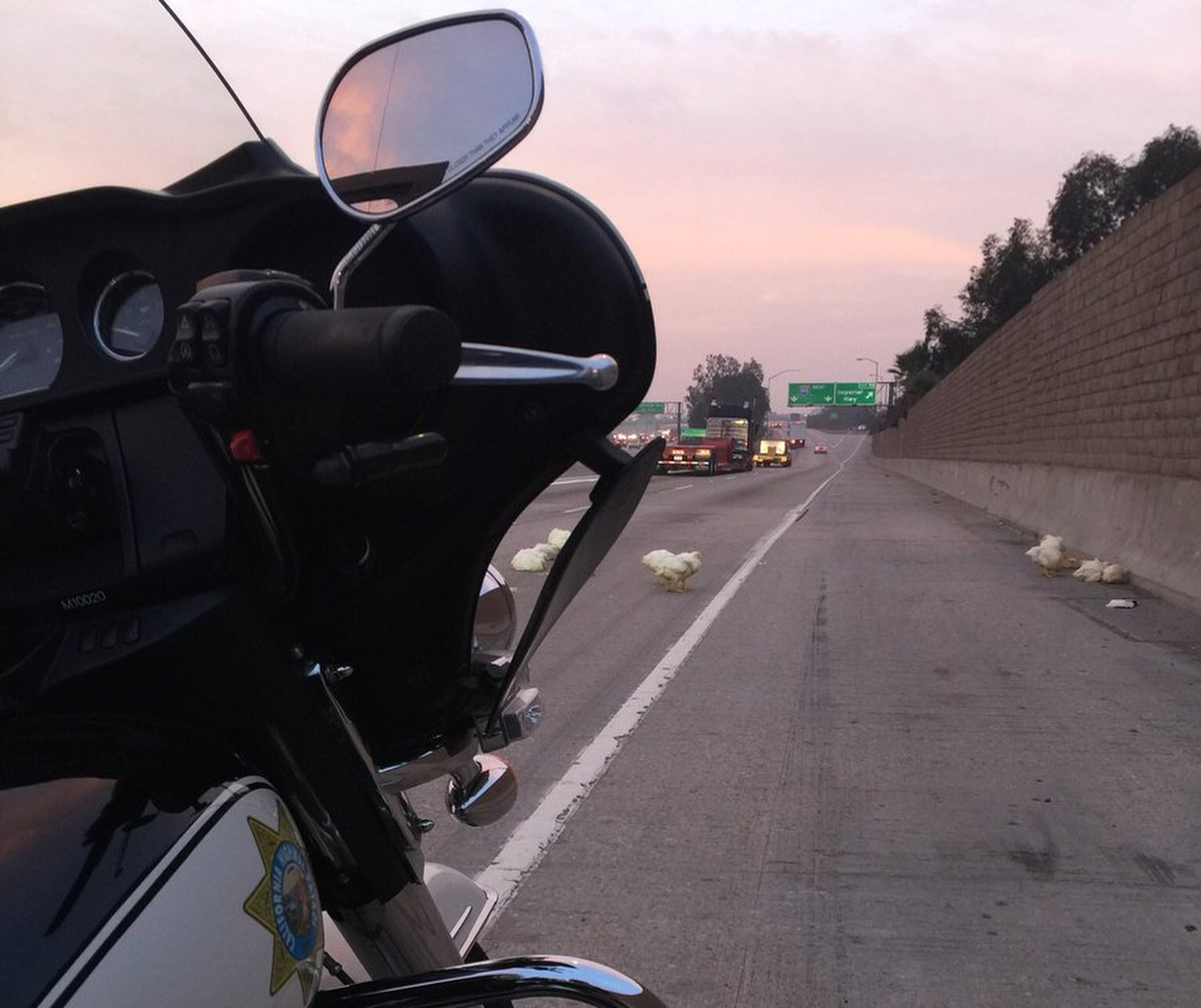 In this photo released by the California Highway Patrol, CHP officers scramble to rescue nearly 20 chickens that ran through highway lanes in Norwalk, Calif., Tuesday, Jan. 2, 2018. The CHP says the birds blocked a portion of Interstate 605 Tuesday morning after their cage fell from the back of a truck. The agency tweeted photos and video of the chickens in lanes and a motorcycle officer collecting them. Officers managed to rescue 17 birds. Two died. (CHP Officer C.Lillie/California Highway Patrol via AP)