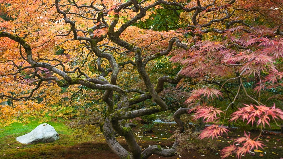 seattles japanese garden proves that you dont have to travel very far to enter another world one of the very best places to enjoy the splendors of fall - Japanese Garden Seattle