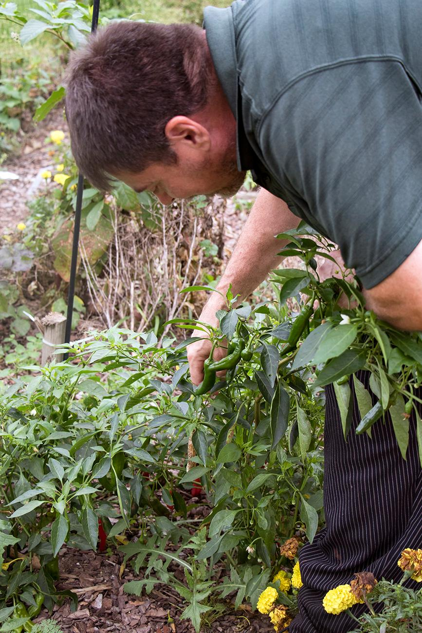 <p>John Caldwell, owner, picking peppers for a dish{&amp;nbsp;}/ Image: Allison McAdams // Published: 10.21.18</p>