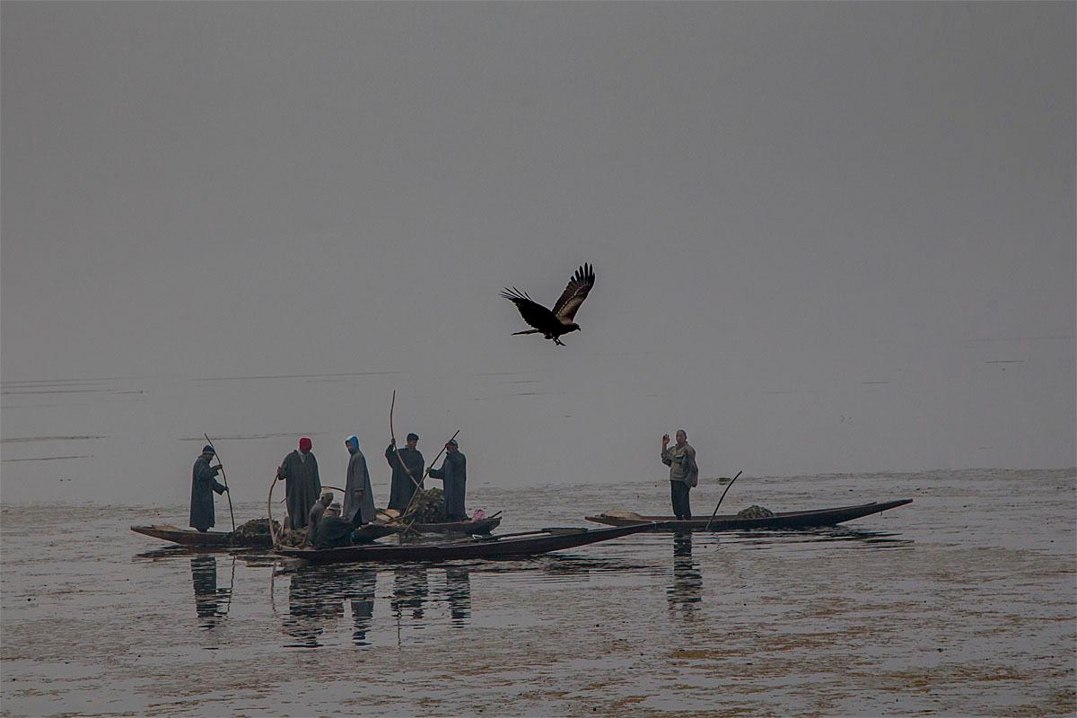 An eagle flies past Kashmiri workers removing weed on a cold and foggy day at the Dal Lake in Srinagar, Indian controlled Kashmir, Tuesday, Nov. 22, 2016. Cold conditions continued in most parts of Kashmir with fog affecting air traffic and normal life. (AP Photo/Dar Yasin)