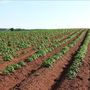 Arkansas farmers sue over crop damage blamed on herbicide
