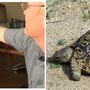 Disabled Navy vet's emotional support turtle missing