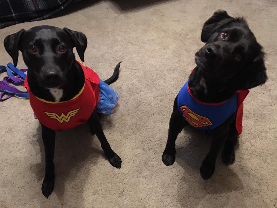 Chloe and Roscoe showing off their superhero side. Submitted by Denise Mengerink