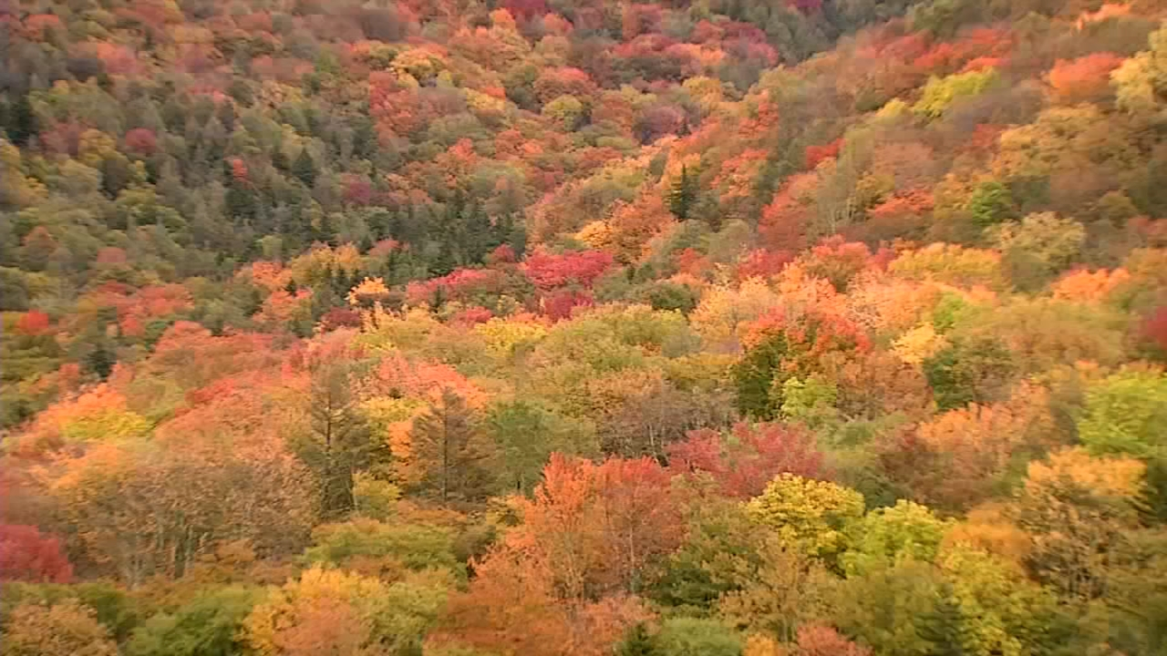 Brook trout spawn in the fall, when the Appalachians explode in color.(WCHS/WVAH)