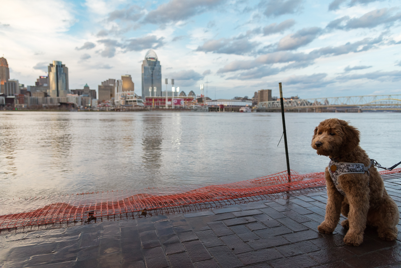 "A puppy surveys the 2018 flood on the Covington side. First published on February 21 in ""A Deluge Of Photos Highlighting The Ohio River Flood Of February 2018"" / Image: Phil Armstrong"
