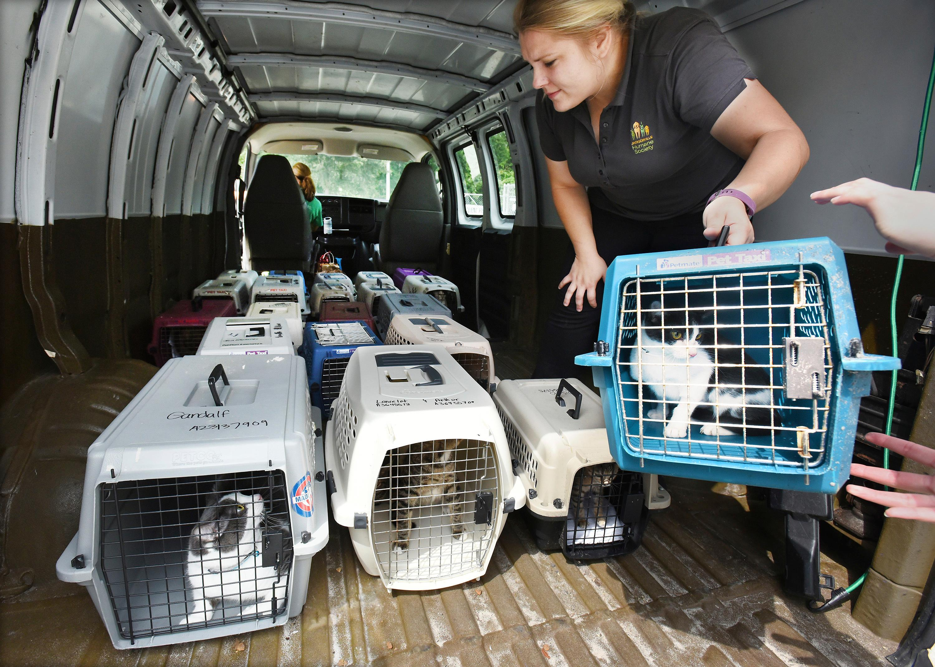 Lauren Jackowiec, the adoptions manager for the Jacksonville, Fla., Humane Society, loads crates of cats into the Humane Society's van for an evacuation trip to Sarasota, Thursday, Sept. 7, 2017. (Bob Self/The Florida Times-Union via AP)