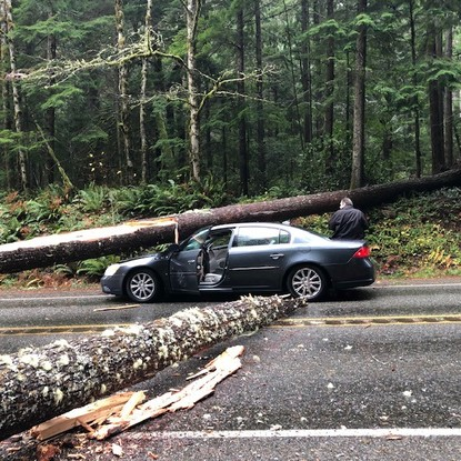 A Bellingham couple survived this close call after a tree fell on their car along Highway 101 near Quilcene. (Photo via: Deborah Bernard)