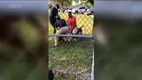 Exclusive: Video shows chaos after pit bull kills dog in Okeeheelee Park, Fla.