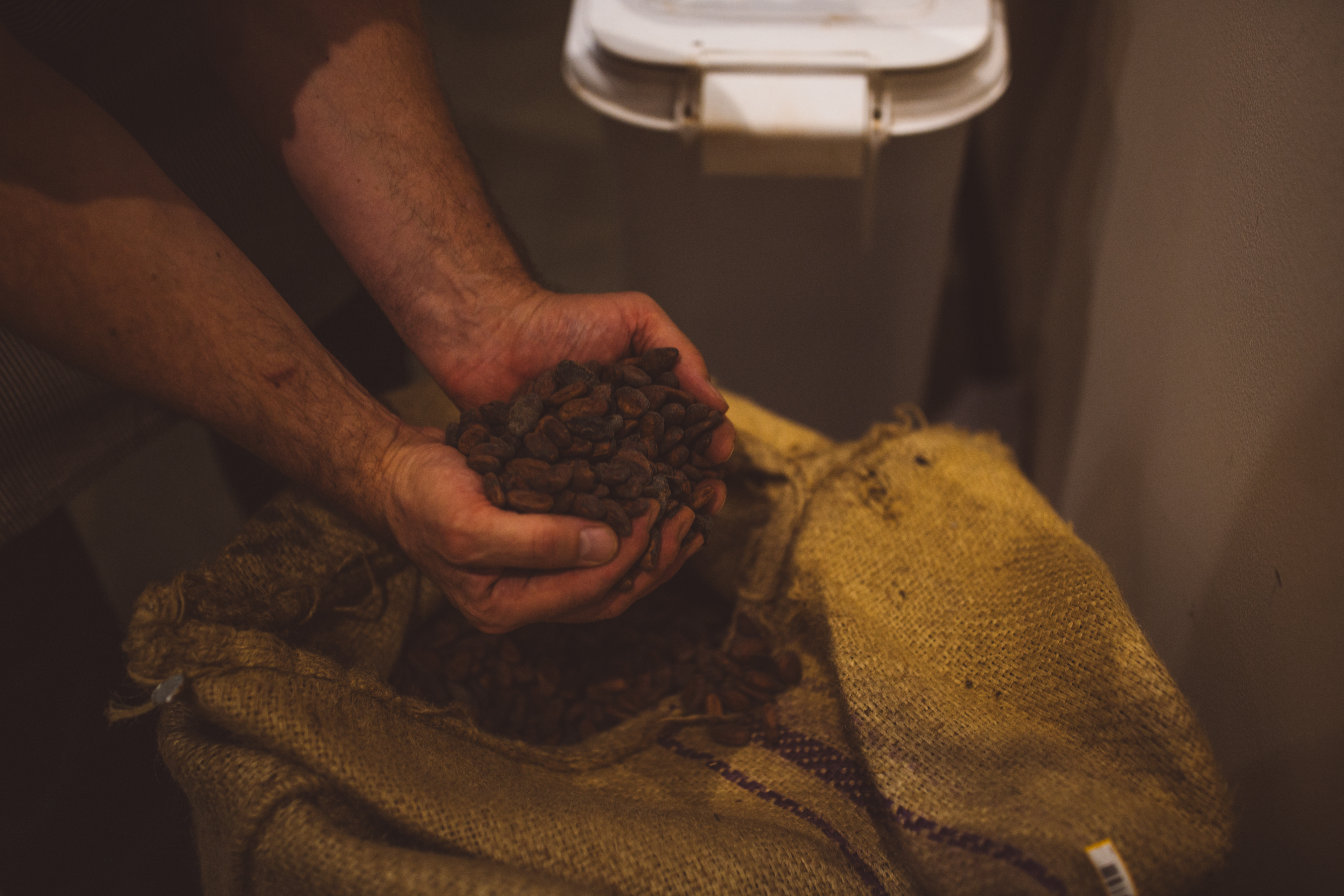 <p>The process of chocolate creation starts with selecting the beans and roasting them until they begin to crack. Next, the cracked beans are put into a winnower, where the nibs are separated from the husks. (Image: Ryan McBoyle / Seattle Refined)</p>
