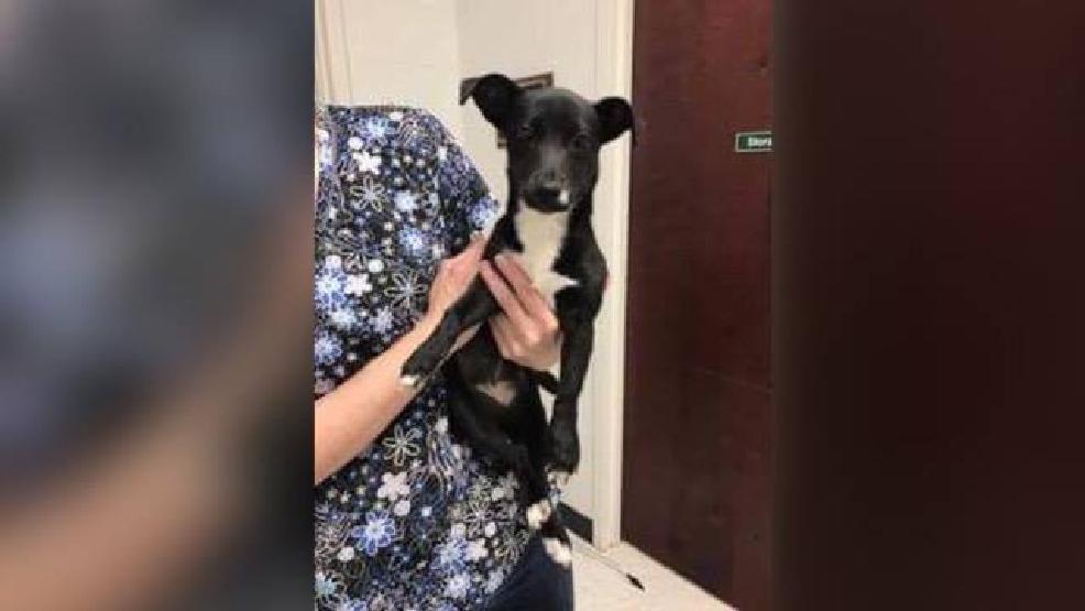 Auto Connection Danville Va >> Pet of the Week: Gypsy | WSET