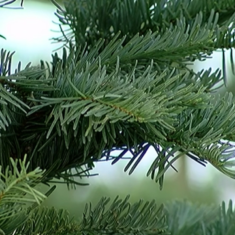 Christmas tree permits available in