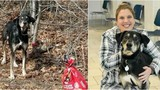 Dog found tied to tree with 'goodbye note' in Va. gets adopted