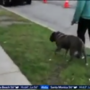 Woman's racist rant caught on video after school employee asks her to pick up after dog